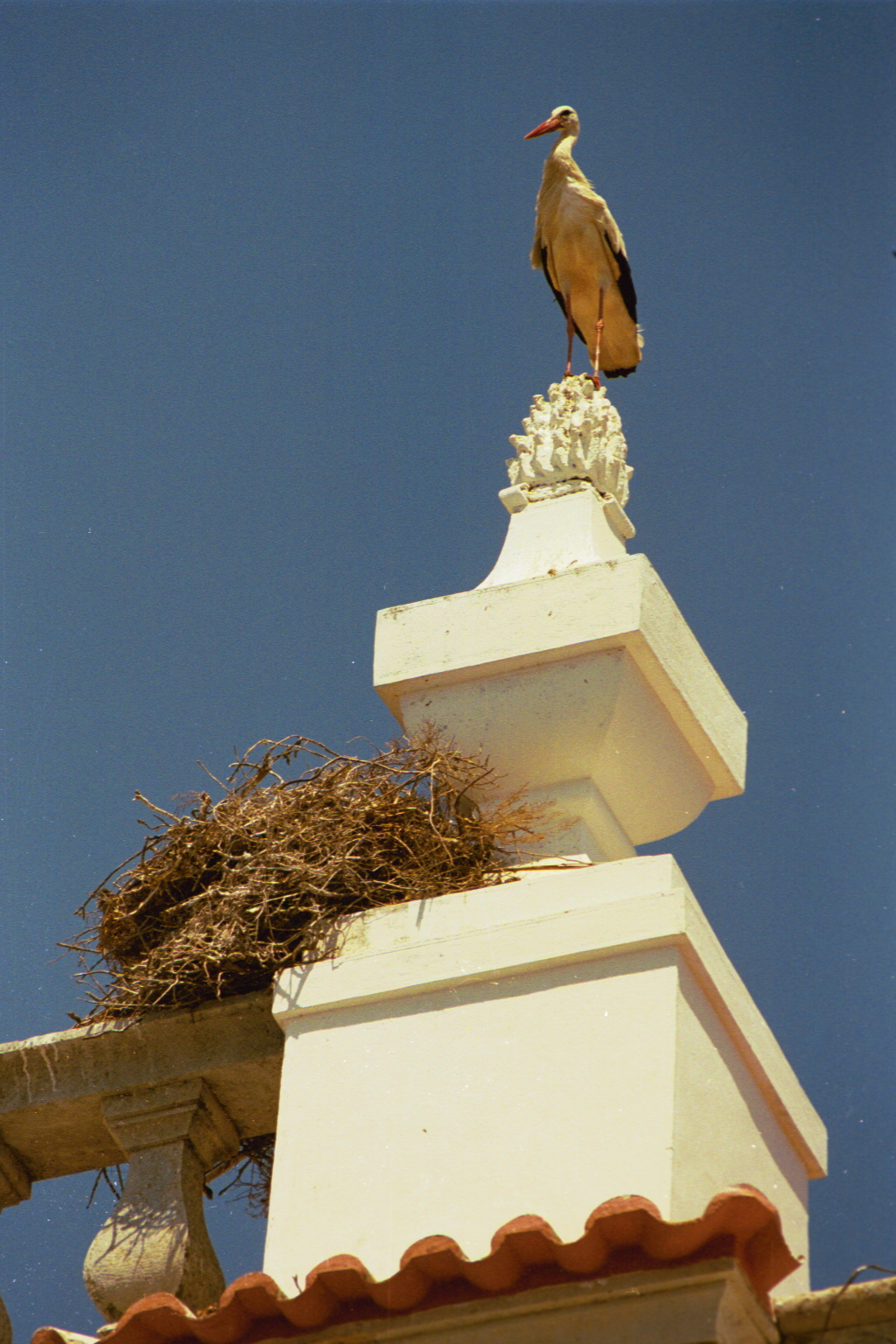 Stork Over Faro, Portugal